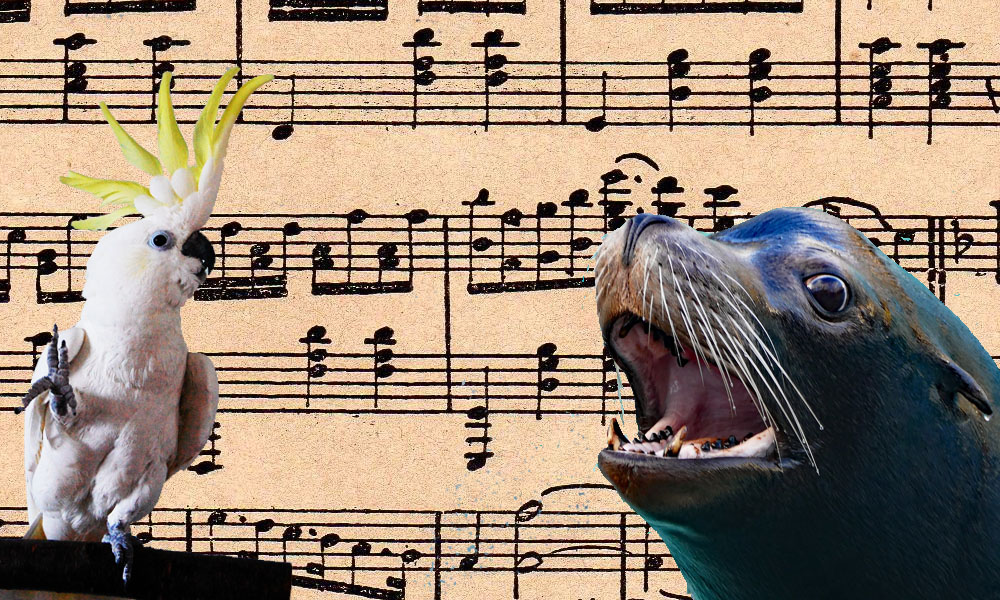 Are Humans the Only Musical Species?