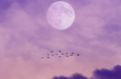 When Birds Migrated to the Moon