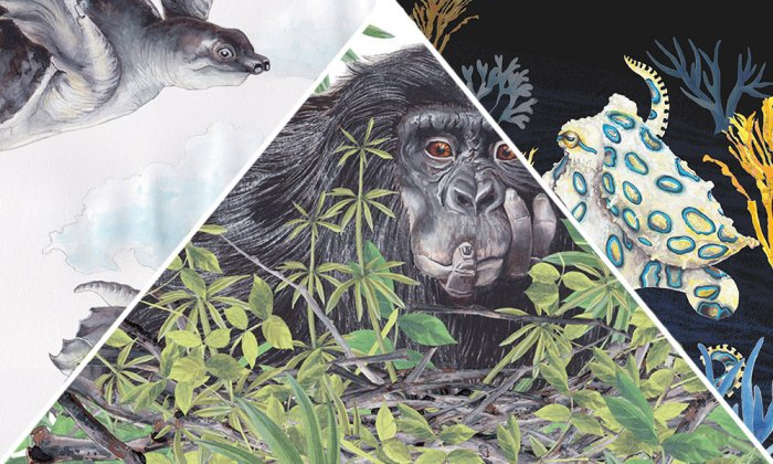 Self-Medicating Chimps, Pugilistic Shrimp, and Other Remarkable Animals: An Illustrated Guide