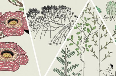 Walking Trees, Parasitic Flowers, and Other Remarkable Plants: An Illustrated Guide
